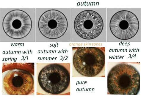 eye pattern analysis ppt eye types iridology expressing your truth blog