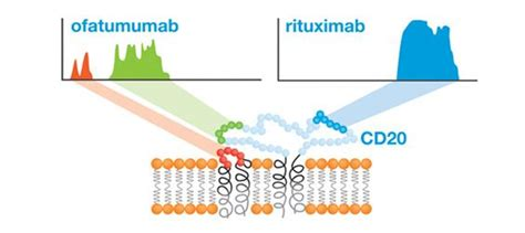 Rituximab Also Search For Pin By Lgm Pharma On Cancer
