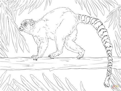ring tailed lemur coloring page free printable coloring