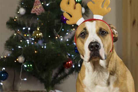 christmas themed names dogs christmas themed dog names christmas decore
