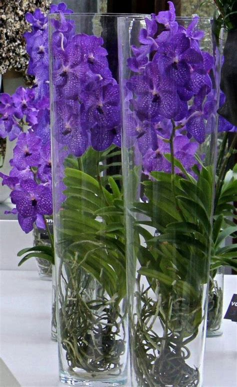Pot Anggrek Vanda vanda orchids orchid and care vaso de