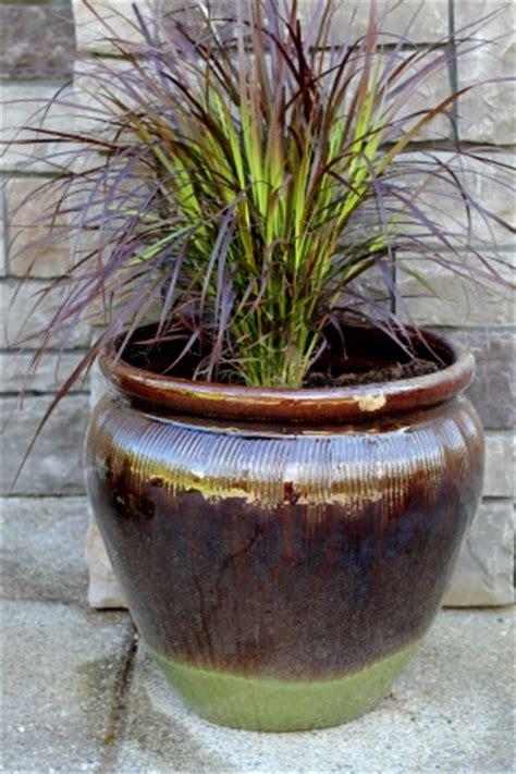 mavis garden blog ideas  summer container gardening