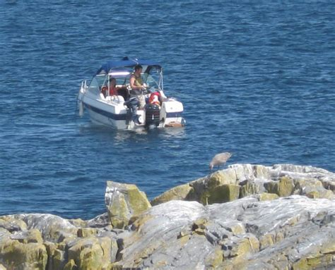 rock the boat it goes left right illegal fishing at race rocks