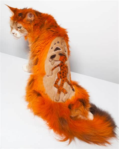 that looks like a tiger cats dyed to look like tigers at intergroom pet summit in new jersey metro news
