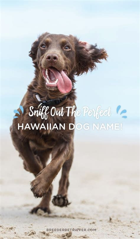 hawaiian puppy names 1000 ideas about names on names tags for dogs and