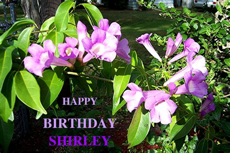 happy birthday shirley happy birthday shirley blue eyes5 from
