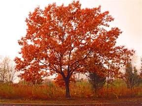 fall tree beauty shawna coronado