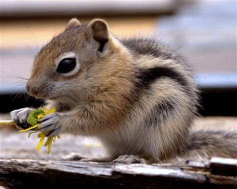 cute chipmunk and squirrel photos on sale