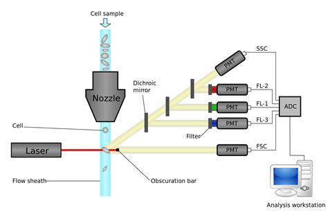 facs diagram ucd flow cytometry summer school 2016 molecular medicine