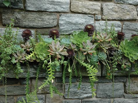 10 secrets for growing healthy succulents outdoors world
