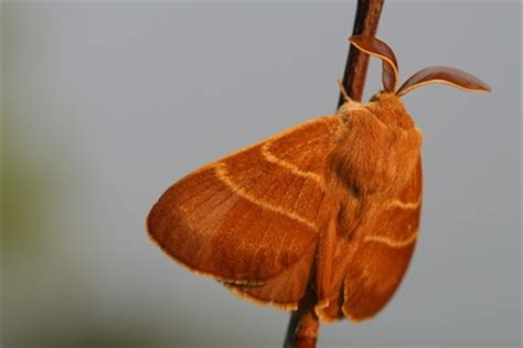 Do Pantry Moths Eat Wool by How To Repair Clothing From Moth Holes Ehow