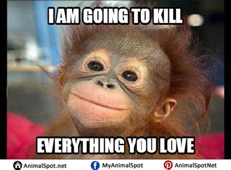 Meme Monkey - monkey meme pictures to pin on pinterest thepinsta
