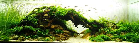 beautiful aquascapes aquascapeizm