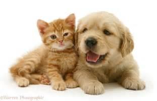 cute puppies kittens wallpaper