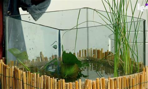 giardini in vaso giardino acquatico in vaso come realizzare un mini pond