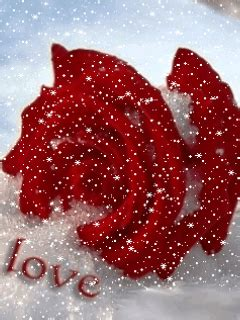 love rose ~ wallpaper