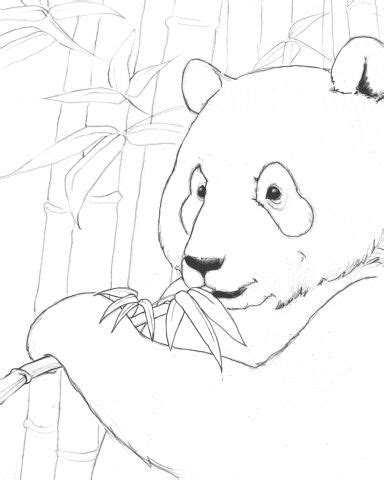 coloring page of giant panda endangered animals free printables printables