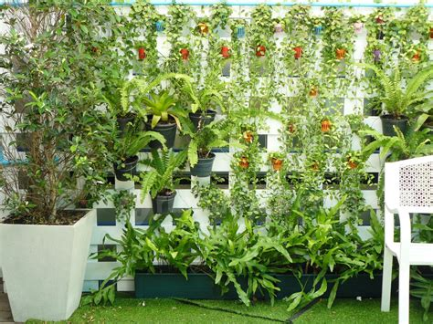 tanaman  cocok  kebun vertikal  tahu