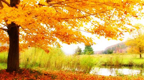 top 10 pictures of trees for day fall is upon us valley ayurveda