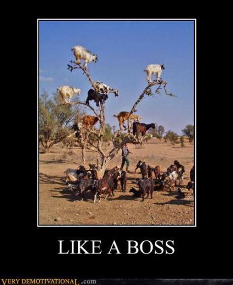 Herding Cats Meme - herding cats memes