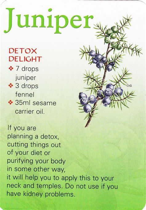Juniper For Detox 17 best images about living juniper on
