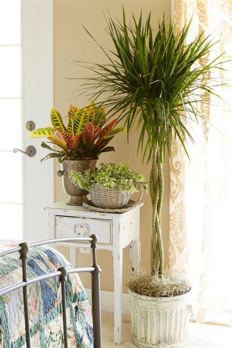 great indoor plants great indoor trees hgtv