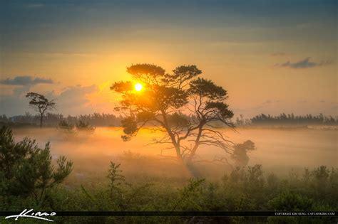 Landscape Photography In Florida Thick Fog Florida Landscape