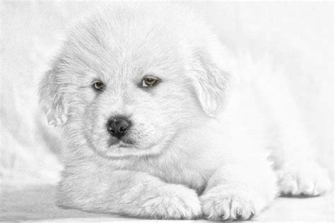 dreamy puppies canine free stock photos 178 free stock photos for commercial use format