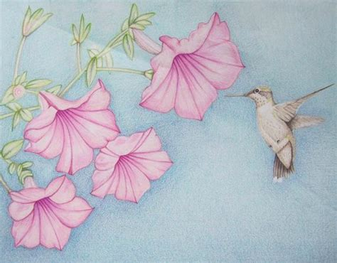 how to draw a hummingbird on a flower hummingbirds and flowers drawings
