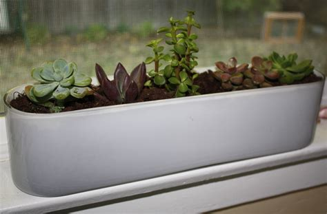 indoor window sill planter a windowsill garden