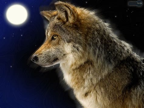 Lone Wolf related keywords suggestions for lone wolf wallpaper