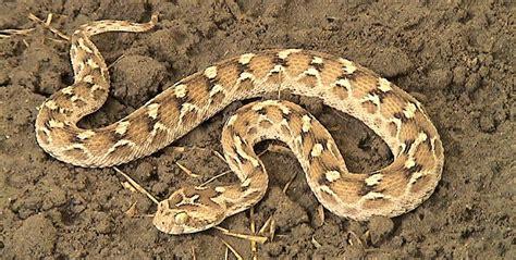 imagenes que se muevan realmente c 243 mo se mueven las serpientes