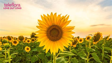 bring  outdoors   virtual zoom backgrounds  teleflora teleflora blog