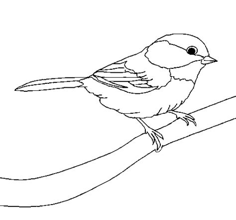 kingfisher bird coloring page free coloring pages of kingfisher bird