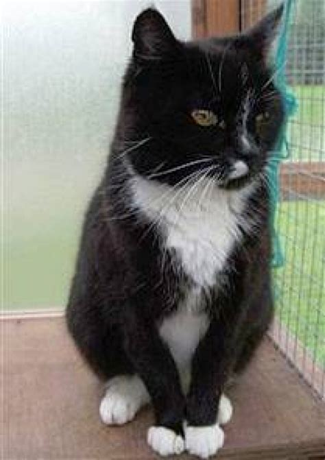 Protect From Cat by Norwich Branch Of Cats Protection Struggling To Find Homes
