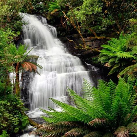 Zen Home Decor Store rainforest waterfall in great otway national park