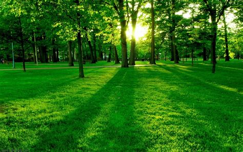 imagenes de bosques verdes infrarojo foro photoshop foros photoshop en espa 241 ol