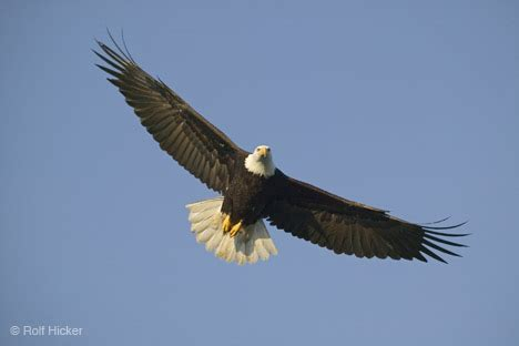 Fly As An Eagle inspire me
