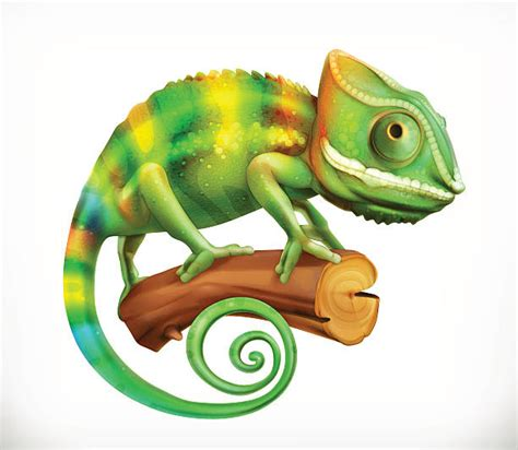 do iguanas change color green iguana clipart chameleon pencil and in color green