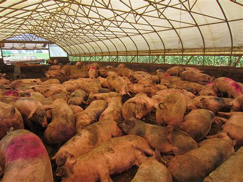 foods happy meat supplier exposed