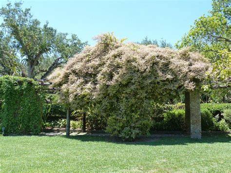 pergola plants what are the best plants for a pergola