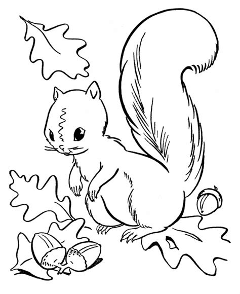 crayola coloring pages autumn leaves fall season coloring page squirrel collecting acorns