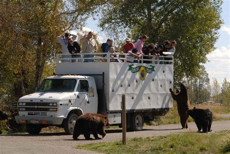 curator tours yellowstone world
