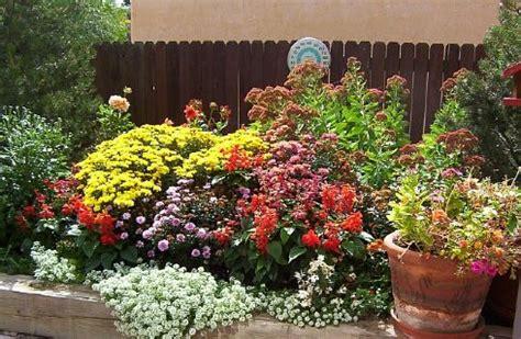 fiori estivi per aiuole fiori estivi da giardino come coltivarli e curarli www