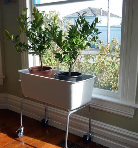 indoor planter ideas 11 innovative fun indoor planter ideas garden lovers club