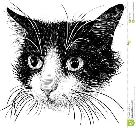 imagenes en blanco y negro gato retrato de un gato blanco y negro ilustraci 243 n del vector
