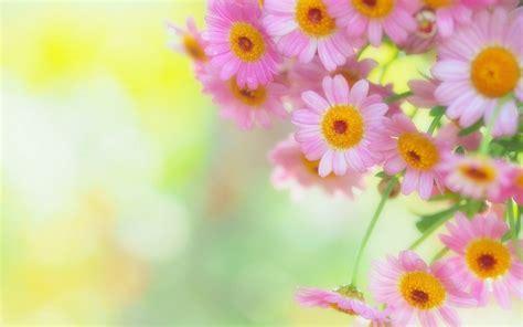 Fresh Flowers Background Wallpaper Hd For Desktop