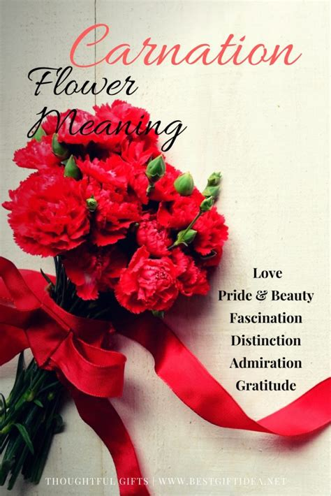 carnation color meanings carnation flower meaning savingourboys info