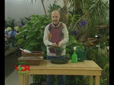 quanto bagnare le orchidee coltivare stella di natale funnycat tv