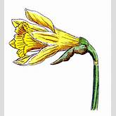 Clip Art of Spring Flowers - Botanicals - The Graphics Fairy